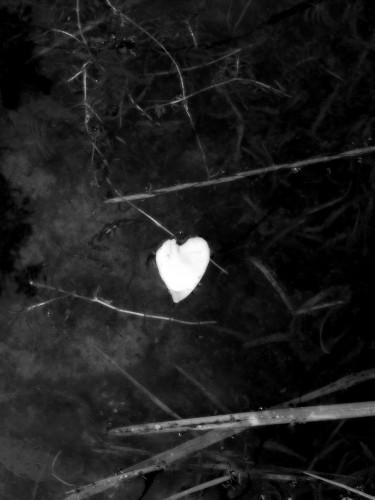 le coeur sur l'eau.jpg