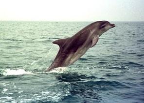 Les-grands-dauphins-sauvages-s-appellent-par-leur-nom_img-left.jpg